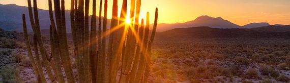 Agency Desert Image